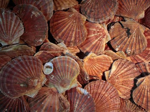 FDA tests confirm hepatitis A in scallops from Philippines | New
