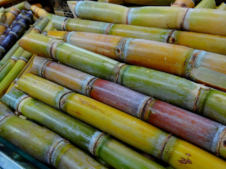 In Mauritius, sugar cane means money, renewable energy | New