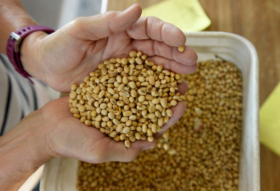 Soybeans and pork will be exempted from added tariffs. -Reuters