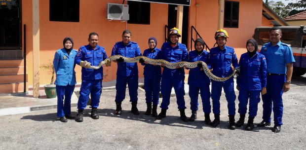 Indonesian woman swallowed by giant python | New Straits