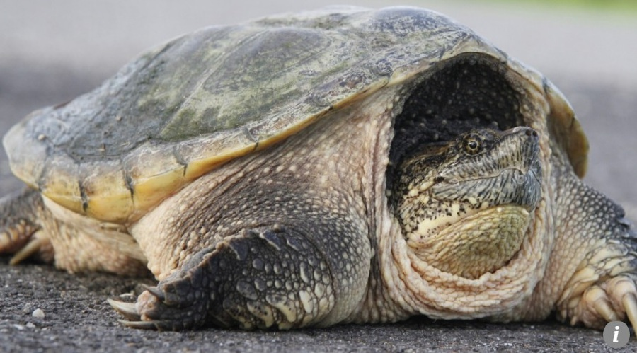 Preston Middle School turtle euthanized amid reports it ate a puppy