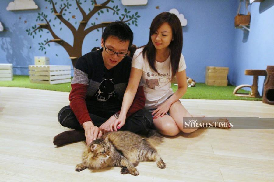 Xavier Yue (left) and Adele Ng from Singapore at the Purradise Cat Café. - NSTP/MUSTAFFA KAMAL