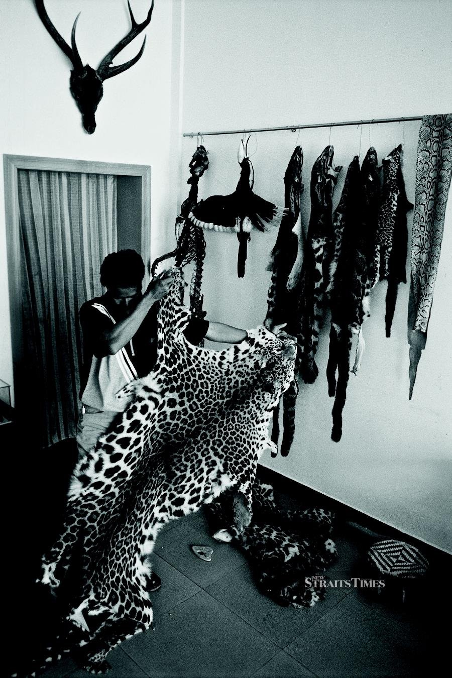 A buyer inspects leopard skins at a retail outlet in Mong La, Special Region 4, Shan State, Myanmar, 2010. Photo by Adam Oswell for TRAFFIC.