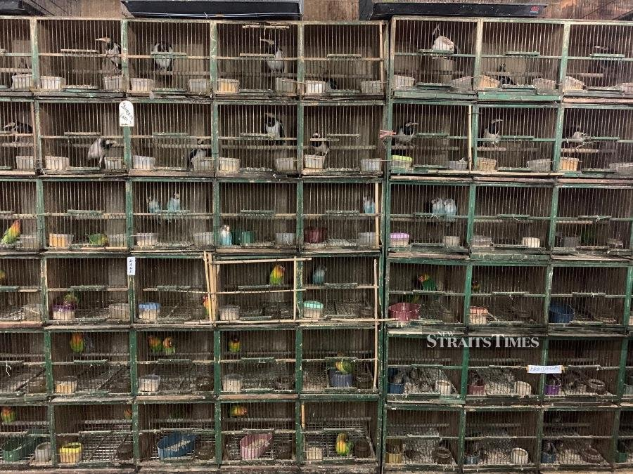 Stacks of bird cages typical of bird markets in Jakarta, Indonesia, July 2019. Photo by K. Krishnasamy for TRAFFIC.