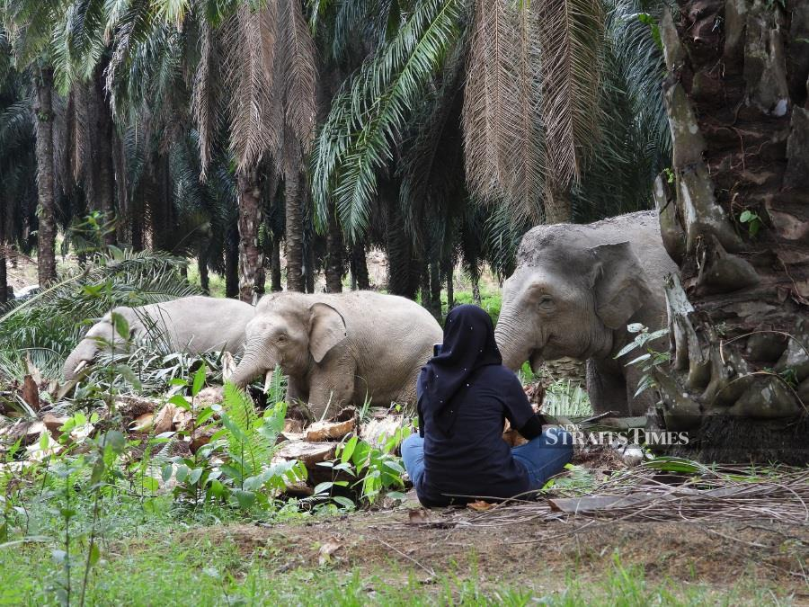 Lasting legacy of Diana — Elephant conservationist shares on loss and friendships forged