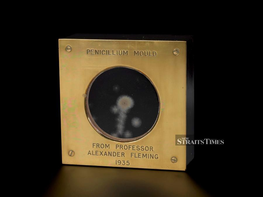 A sample of the actual penicillin mould created by Alexander Fleming.