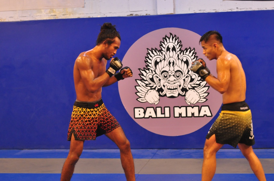 Spirit of the Jungle Cat    Malaysian MMA fighter emerges