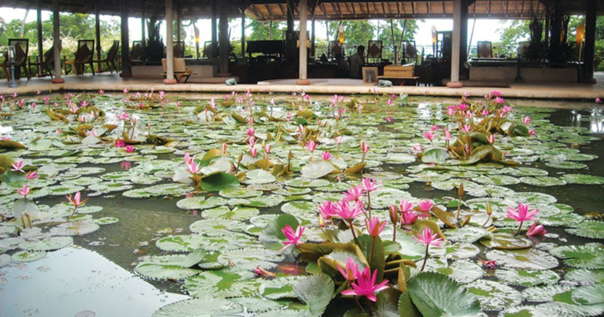 Serene Water Garden New Straits Times Malaysia General Business