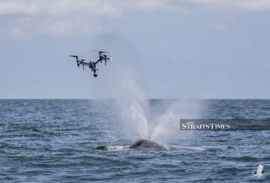 The SnotBot drone is a modified consumer drone which flies through the blowhole of a whale.