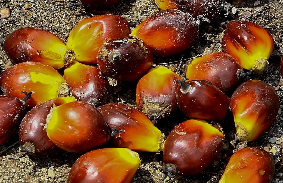 Last month, India restricted imports of refined palm oil and asked importers to avoid purchases from Malaysia. -NSTP/File pic