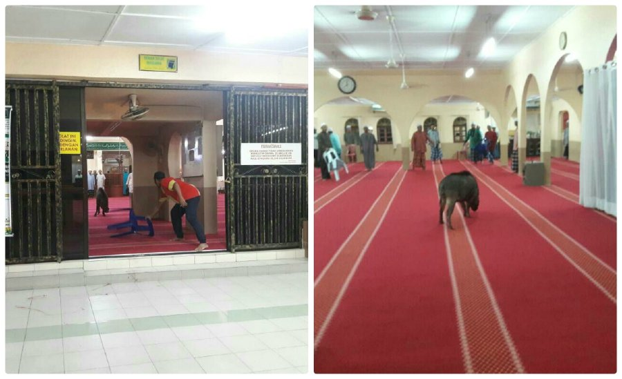 Man injured in wild boar attack at Sungai Buloh mosque | New